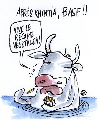 Les OGM BASF