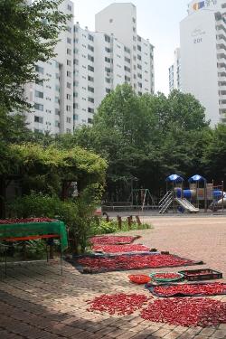 Séchage du piment par le club des anciens dans une banlieue populaire de Séoul.