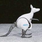 kangourou-bio.jpg